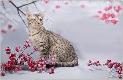 На снегу среди рябины красной