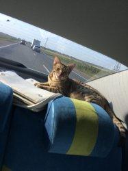 Самое удобное место в машине!