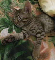 Тепло под одеялком