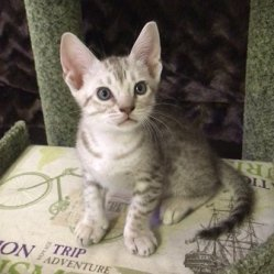 Irbis 1,5 месяца