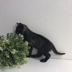 Кевин 1,5 месяца