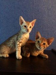 Боняша и Арчи